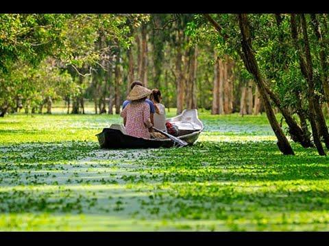 Vietnam tour | Vietnam travel | Xeo Quyt Forest | Rung Tram | A beautiful thick canopy of tall trees & Vietnam tour | Vietnam travel | Xeo Quyt Forest | Rung Tram | A ...